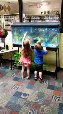 Fish tank w/ new fish